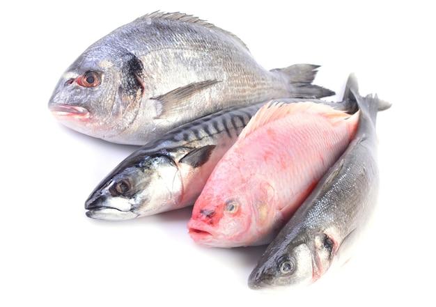 흰색 바탕에 바다 물고기
