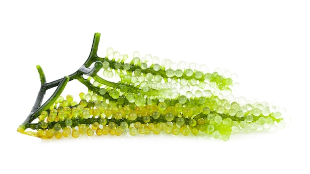 Sea grapes ( green caviar ) seaweed on white