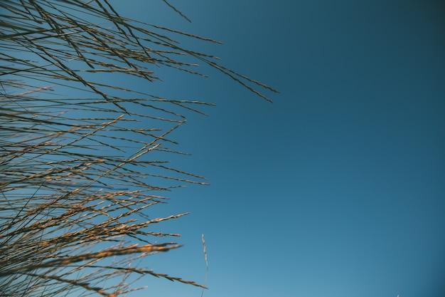 空に対して海草
