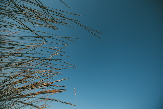 Морская трава против неба.