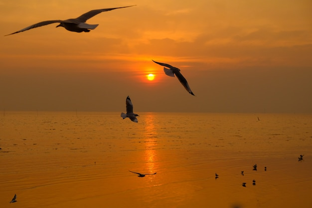 Sea gull fly over the sunset travel in thailand