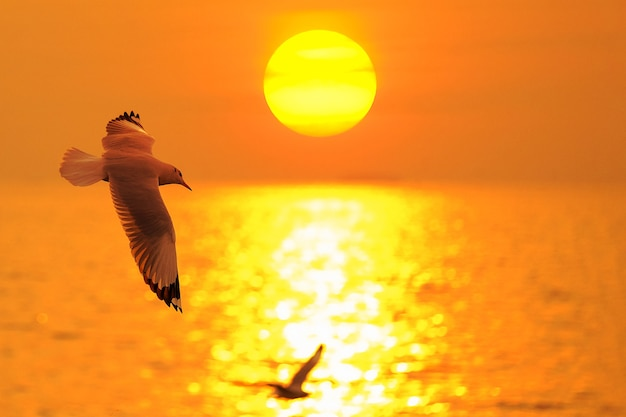 Sea gull fly over the sunset