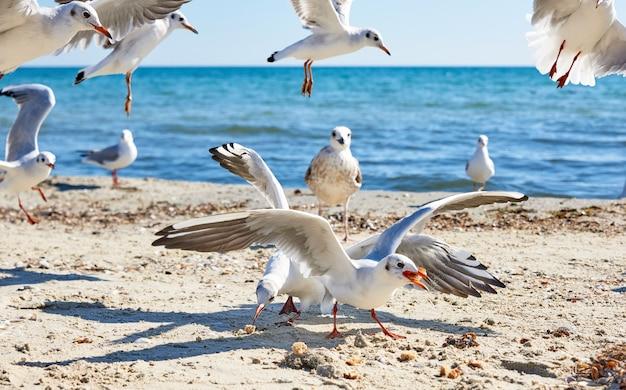 Sea gulls on the beach in a summer sunny day, ukraine village lazurnoe