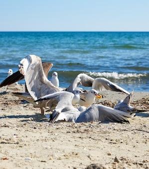 Sea gulls on the beach in a summer sunny day