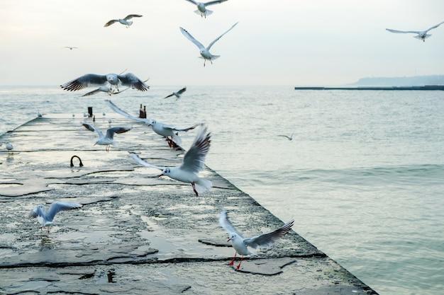 Чайки летают над пирсом