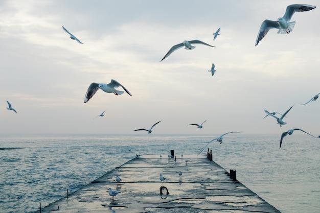 Sea gulls flying over pier