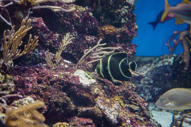 Sea life, colorful sea fish swimming in clear water with coral or water plant in background