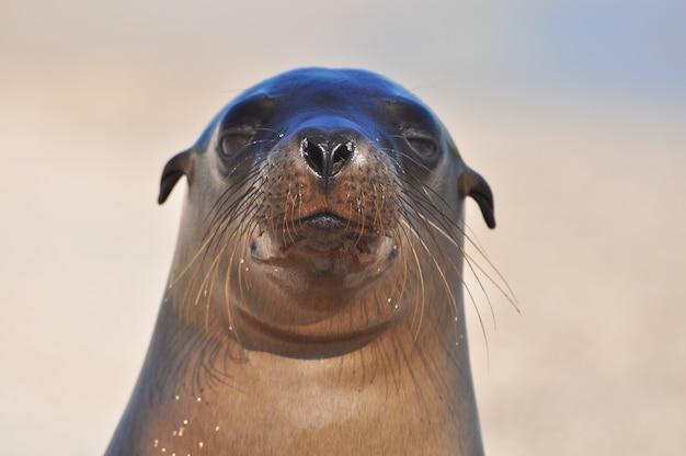 Sea lion on the beach