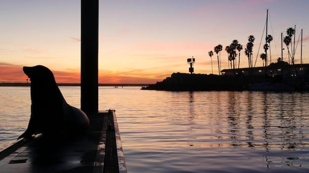 부두에 바다 사자, 미국 오션 사이드의 선착장. 야생 해양 동물 휴식, 캘리포니아 바다 해안 야생 동물. 바닷물 근처에서 자유를 밀봉하십시오.