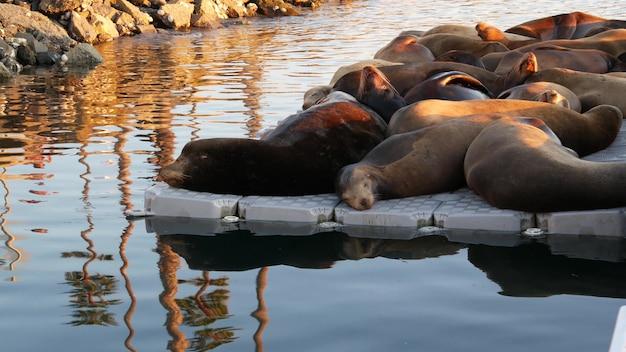 부두에 바다 사자 번식지 캘리포니아 미국 캘리포니아 바다 해안 야생 동물 바다 물에 의해 야생 물개