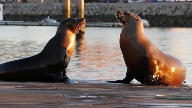 바다사자 사육장, 항구 마을의 부두, 미국 오션사이드의 정박지. 야생 해양 동물 휴식, 캘리포니아 태평양 연안 야생 동물. 바다 물 근처에서 자유로이 물개. 재미 있는 pinniped는 해안에서 휴식을 취합니다.