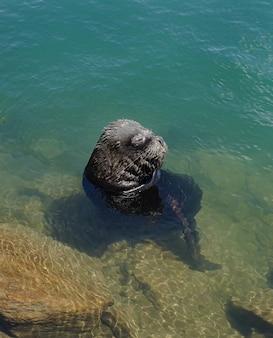 Sea lion shoreline chile