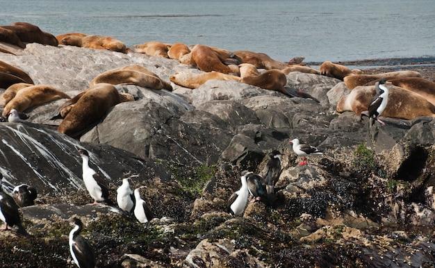 Морские львы и тюлени в скале, патагония аргентина Premium Фотографии