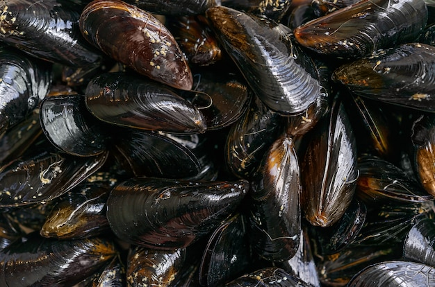 바다 홍합 배경, 지중해 음식입니다. 평면도