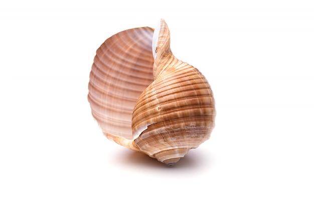 Sea natural shell