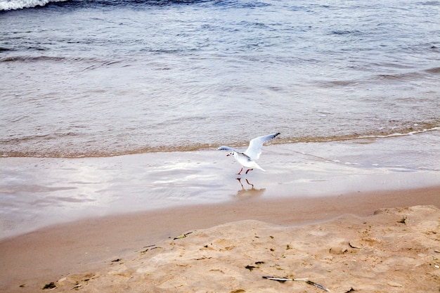 해변에서 바다 모래