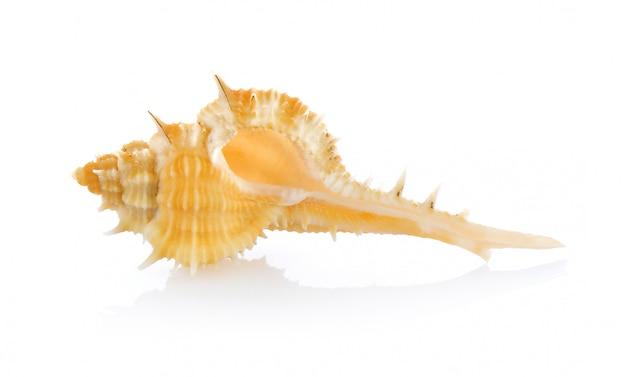Морские раковины, изолированные на белом