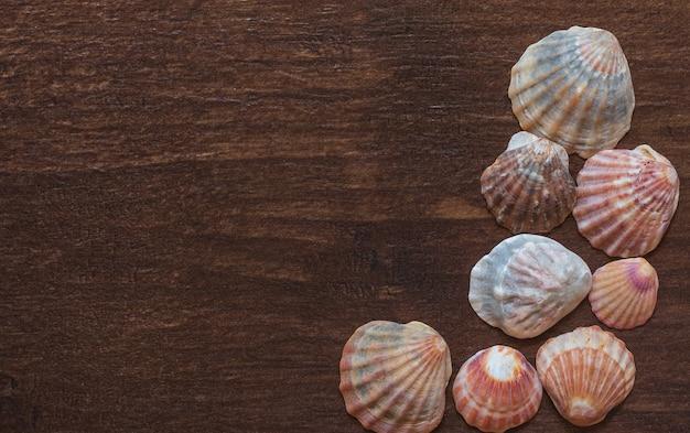 Sea shell isolated. shell, seashell or conch as decor or souvenir.