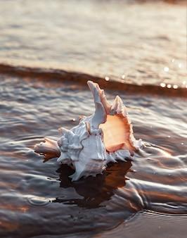 貝殻は夕日の光線で砂浜の海岸にあります