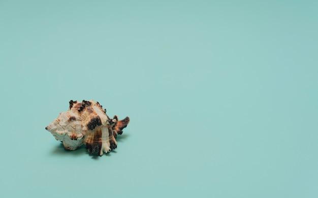 복사 공간이 있는 파란색 배경 여름 시간 미니멀리즘 개념 인사말 카드의 바다 조개