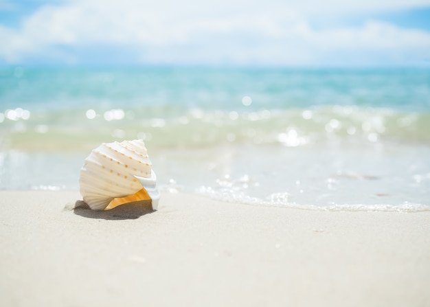 Sea shell on sand beach with blur image of blue sea and blue sky. ocean pattaya thailand. for travel summer holidays.
