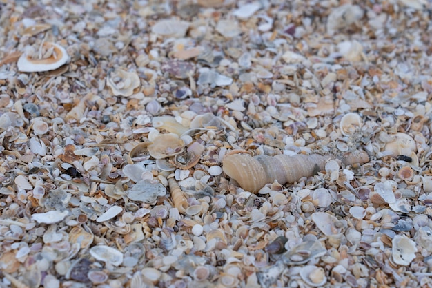 Sea shell on sand in the beach