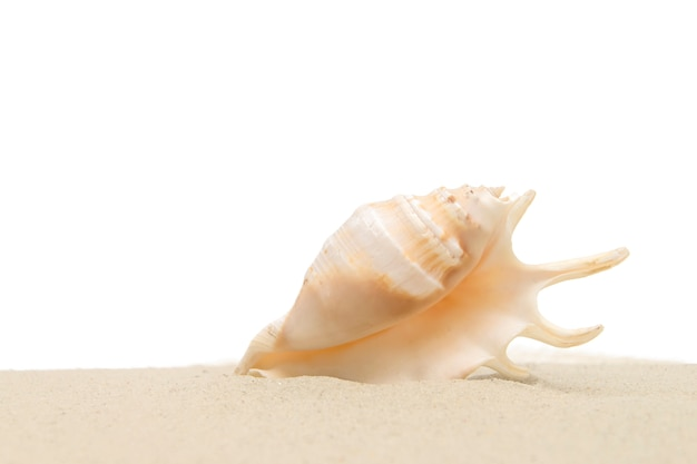 Sea shell in sand isolated on white background