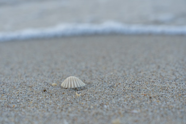 Sea shell on the sand