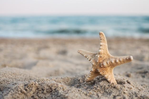 熱帯の砂のターコイズブルーのカリブ海の夏休みの貝殻ヒトデ