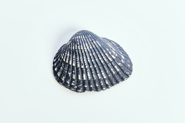Sea shell on white