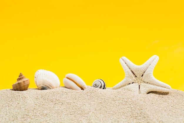 Морские раковины и морская звезда на песке с желтым фоном с копией пространства