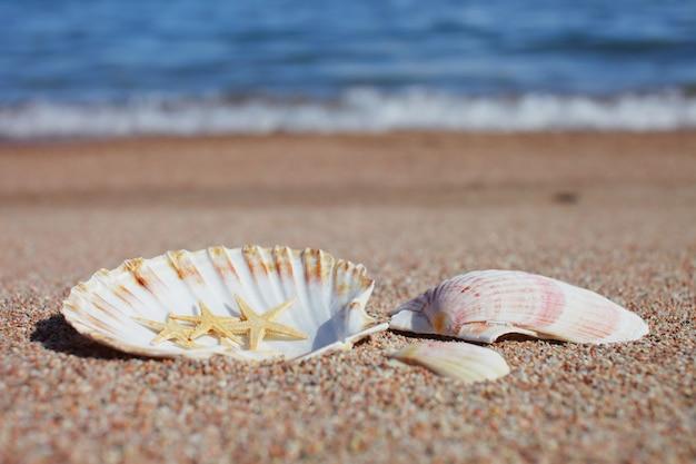 바다 조개와 해변에서 불가사리