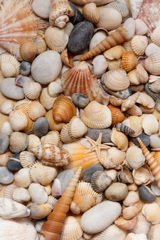 Sea shells background. selective focus and full fill.