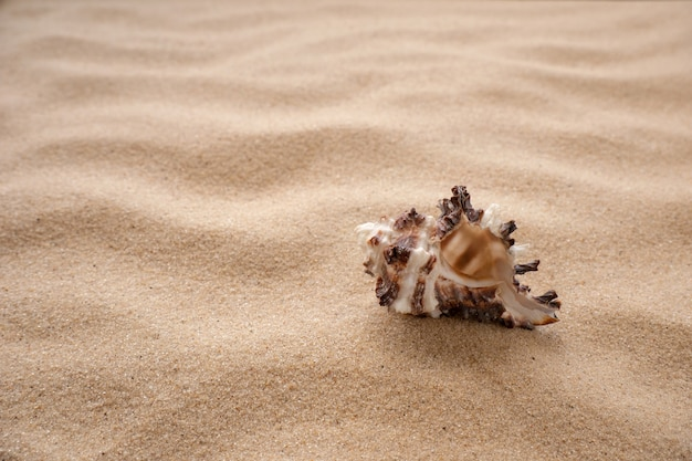 Sea shells lie on the sand. the concept of rest, sea, travel. copy space.