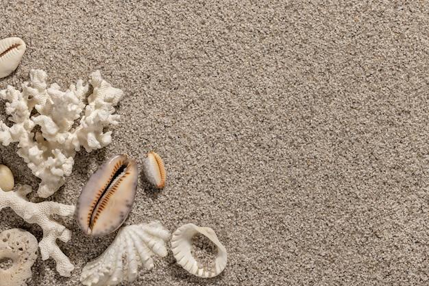 Морские ракушки на чистом песке летнего пляжа фон и концепция обоев копируют пространство