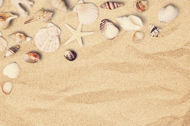 Морские раковины на песчаном пляже с местом для текста
