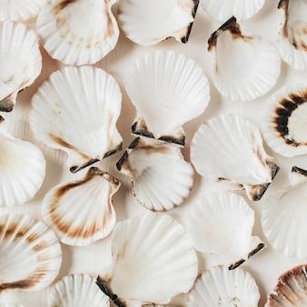 Образец морских раковин на белом. плоская планировка, вид сверху минимальная морская текстура.