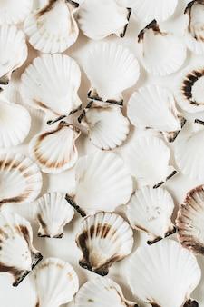 Образец морских раковин на белом