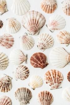 Образец морских раковин на белом Premium Фотографии