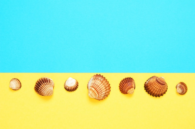Sea shells pattern on  turquoise and yellow paper background. summer concept.