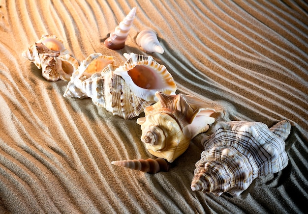 Sea shells seashells, sea shells from beach - panoramic - with large scallop shell.