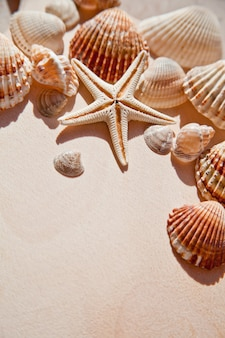 Sea shells and star