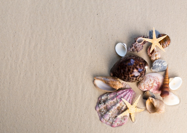 Sea shells and starfishes on sand