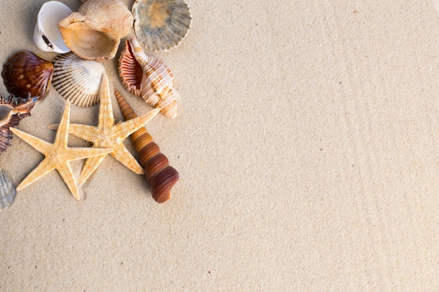 Sea shells and starfishes on the sand