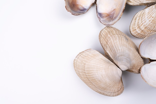 Sea shells on white background arranged on bottom right corner with copy space natural seashells
