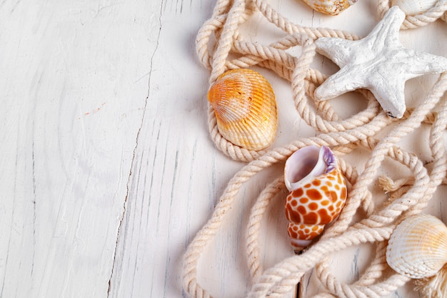 Sea shells with rope on white wooden, copy space. vacation concept