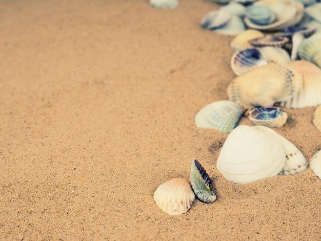 背景として砂と貝殻、トップビュー。フラットレイ
