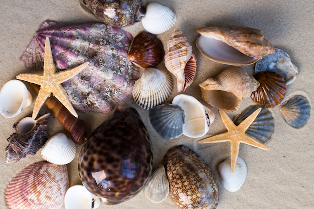 Sea shells with sand as