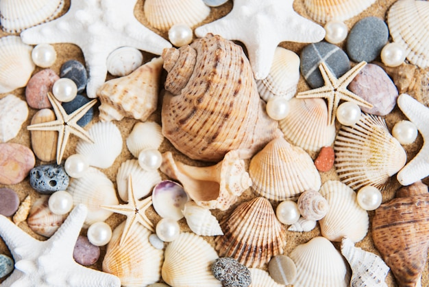 Sea shells with sand close-up