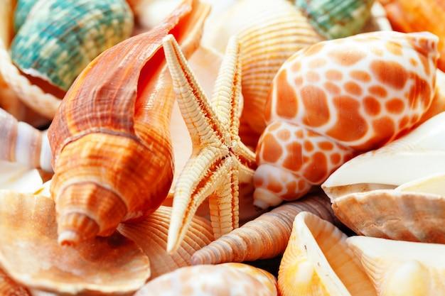 Sea shells. .